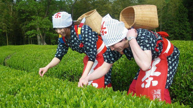 蔵屋鳴沢 茶畑コスプレ