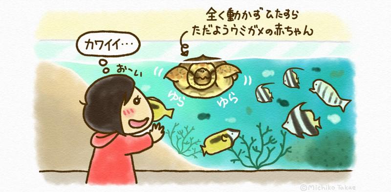 ウミガメの赤ちゃんがガラス越しの目の前でゆらゆら漂っていてかわいかった〜!