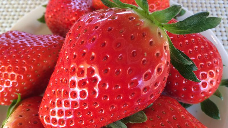 いちごの里 スカイベリー イチゴ